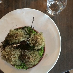 NOMA-moss-cep-photo