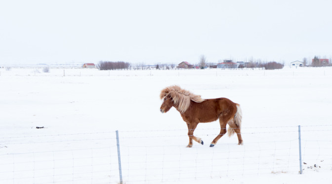 Postcards from a wintry Iceland