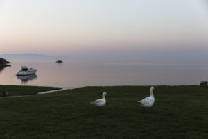 Geese at hotel